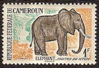 Elephant cameroun